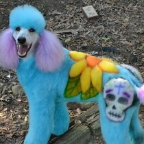 Is this inhumane or art? Either way, this dog must hate it.