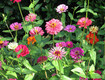 GARDENING: Tricks to Beating Nematodes to the Garden