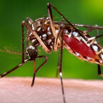 Zika Spreads in Florida