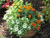 GARDENING: Grow Your Own Cutting Garden