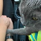 Dying Cat Holds His Owners' Hands Right Before Vet