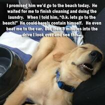 A trip to the beach...