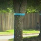 HOA Orders Residents to Remove Ribbons for Fallen Cops