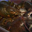 Long-Lived Lobster Saved From Pot at Last Minute