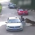 Mom Killed Trying to Rescue Daughter From Tiger Attack