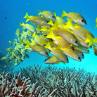 Great Barrier Reef Found Relatively Unaffected By Global Warming
