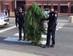 Cops in Maine Arrest a Talking Tree