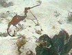 New Sea Dragon Species Seen in Wild for First Time