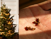Your Christmas Tree Could Be Infested With 25,000 Bugs