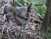 Lonely Deer-Humping Monkey Shocks Scientists, Internet (VIDEO)