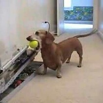 Dog Activated Automatic Ball Launcher!