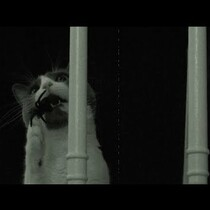 Check Out These Cats And Giant Spider Prank