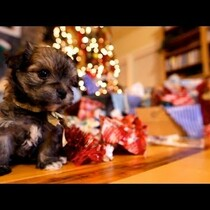 Puppies and Presents.  Adorable!