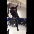 VIDEO: Exhiben momento de 'diversión' entre policías