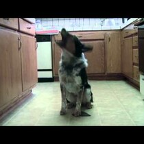 WATCH: Jumpy the dog