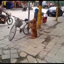 Watch What The Dog Does After Guarding His Owners Bike! (VIDEO)