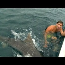 Dude Almost Ends up as Shark Food!!