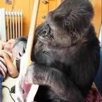 Flea Plays Bass with Koko the Gorilla