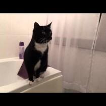 cute cat...POSING in the mirror...yep...happy Friday! haaaaa