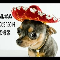 Why Not?  Salsa Dancing Dogs...