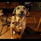 Tina The Dog Sings