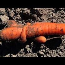 Carrot Love!