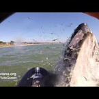 WATCH: When Whales love your Flute playing!