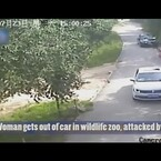 VIDEO: Chinese woman mauled to death by tiger after getting out of car in wildlife zoo