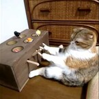 "Cat Plays ""Whack-A-Mole."" Sort Of."