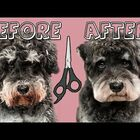 LOOK!  Dogs Before & After Haircuts!