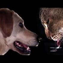 Cats v Dogs - SLO MO Drinking = Amazing