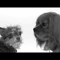 First Kiss Video Parodied With Dogs