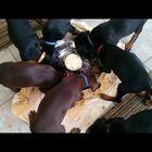A Pinwheel of Puppies Enjoying Dinner