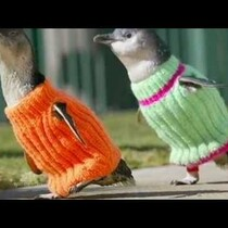 Did You Know Knitting Scarves Can Save Lives!?