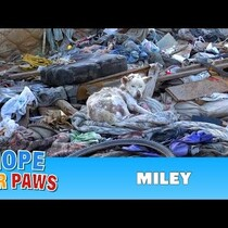 MILEY--this is a video every animal lover should see