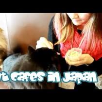 Cat Cafe In Japan!