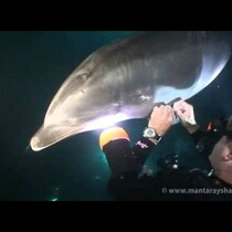 Injured Dolphin Approaches Diver For Help, Then This Happened....