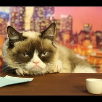 Grumpy Cat Auditions For The Late Show