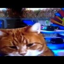 Keyboard kitty at Puppy Bowl!!
