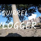 Squirrel Steals GoPro