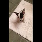 Puppy Gets Caught Red Handed