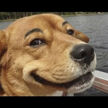 Bored?  Drunk?  Draw some eyebrows on a dog?