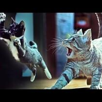 Kitties on The Beat!