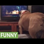 HA!  Bulldog Tries to Warn Little Girl in a Horror Movie
