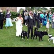 Dog Pees On Weeding Dress