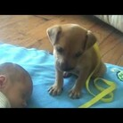 Puppy sees a baby sleeping, and then does the sweetest thing.