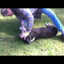 Man Saves Dog With CPR!