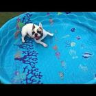 Dog Doesn't Need Water To Swim [Video]