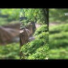 Original video of Cincinnati Zoo gorilla incident