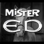 WATCH:  Mr Ed Opening Theme